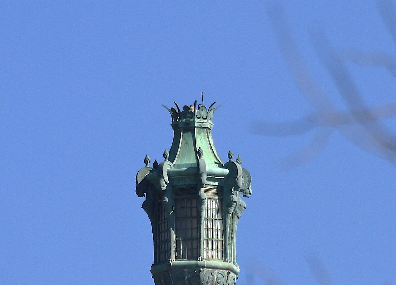 Washington Square Park Hawks and acrobatic Raven – January